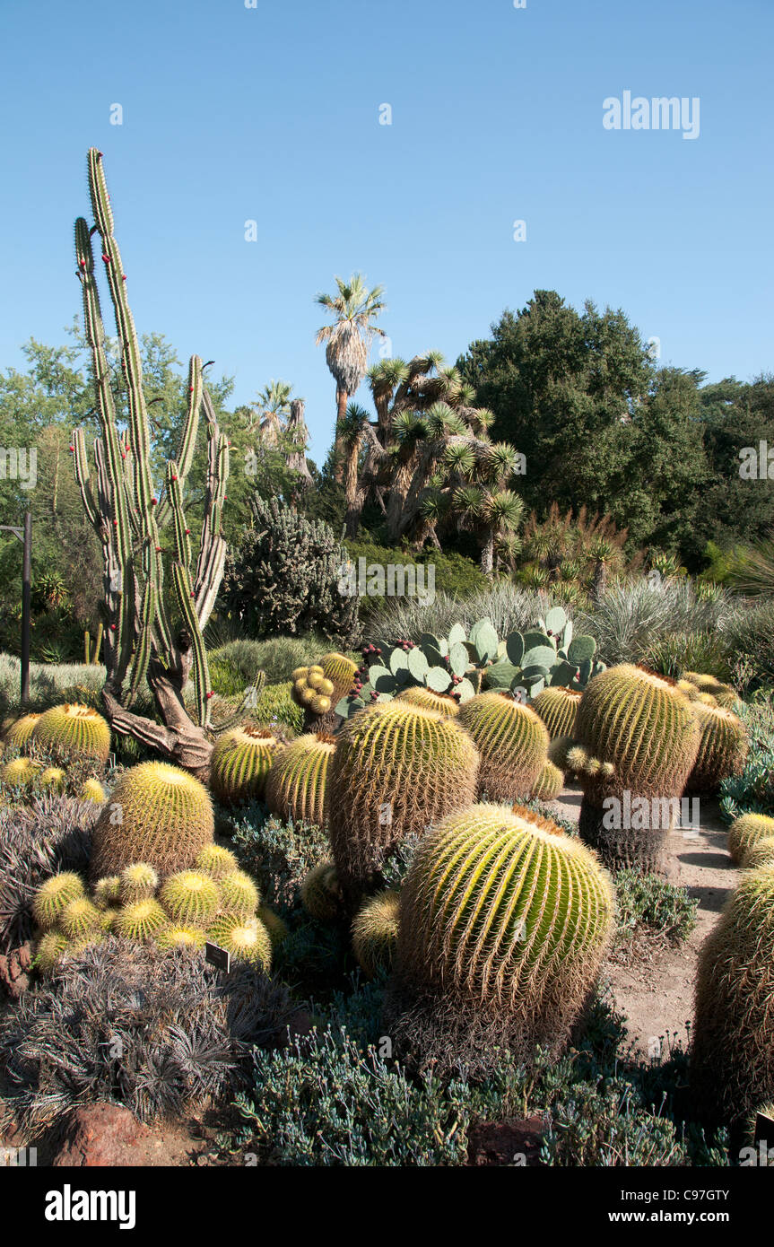 Beau The Huntington, Library Art Collections, Botanical Gardens, Cactus  Succulents Garden San Marino California America