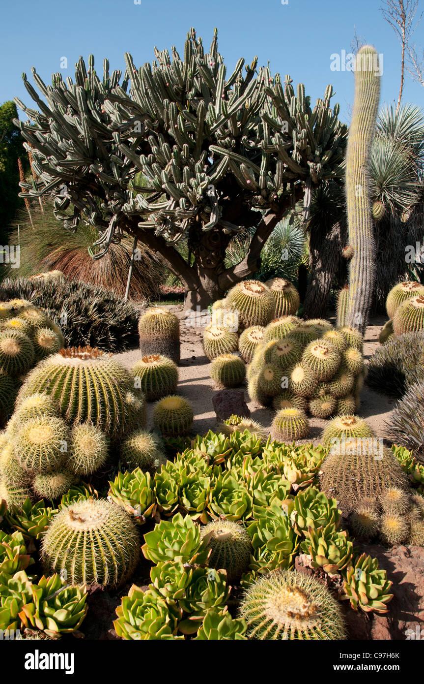 Beau The Huntington, Library Art Collections, Botanical Gardens, Cactus  Succulents Garden San Marino California America