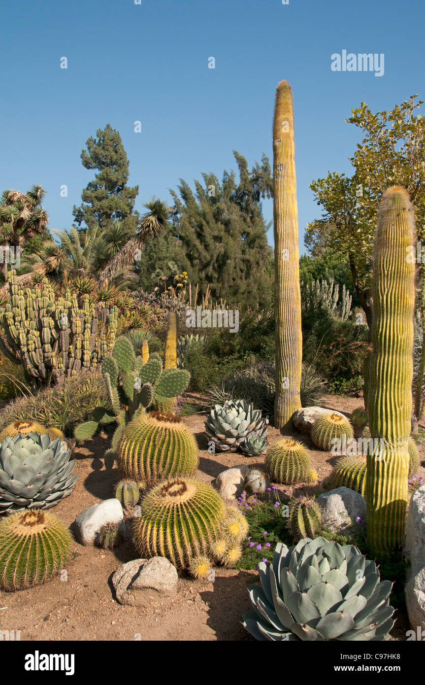 Incroyable The Huntington, Library Art Collections, Botanical Gardens, Cactus  Succulents Garden San Marino California America