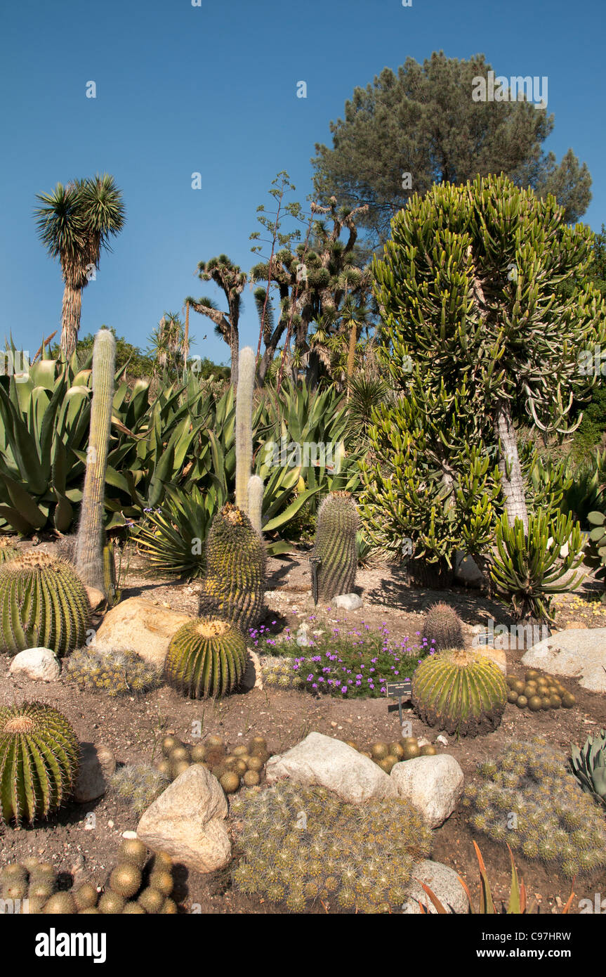 The Huntington, Library Art Collections, Botanical Gardens, Cactus  Succulents Garden San Marino California America