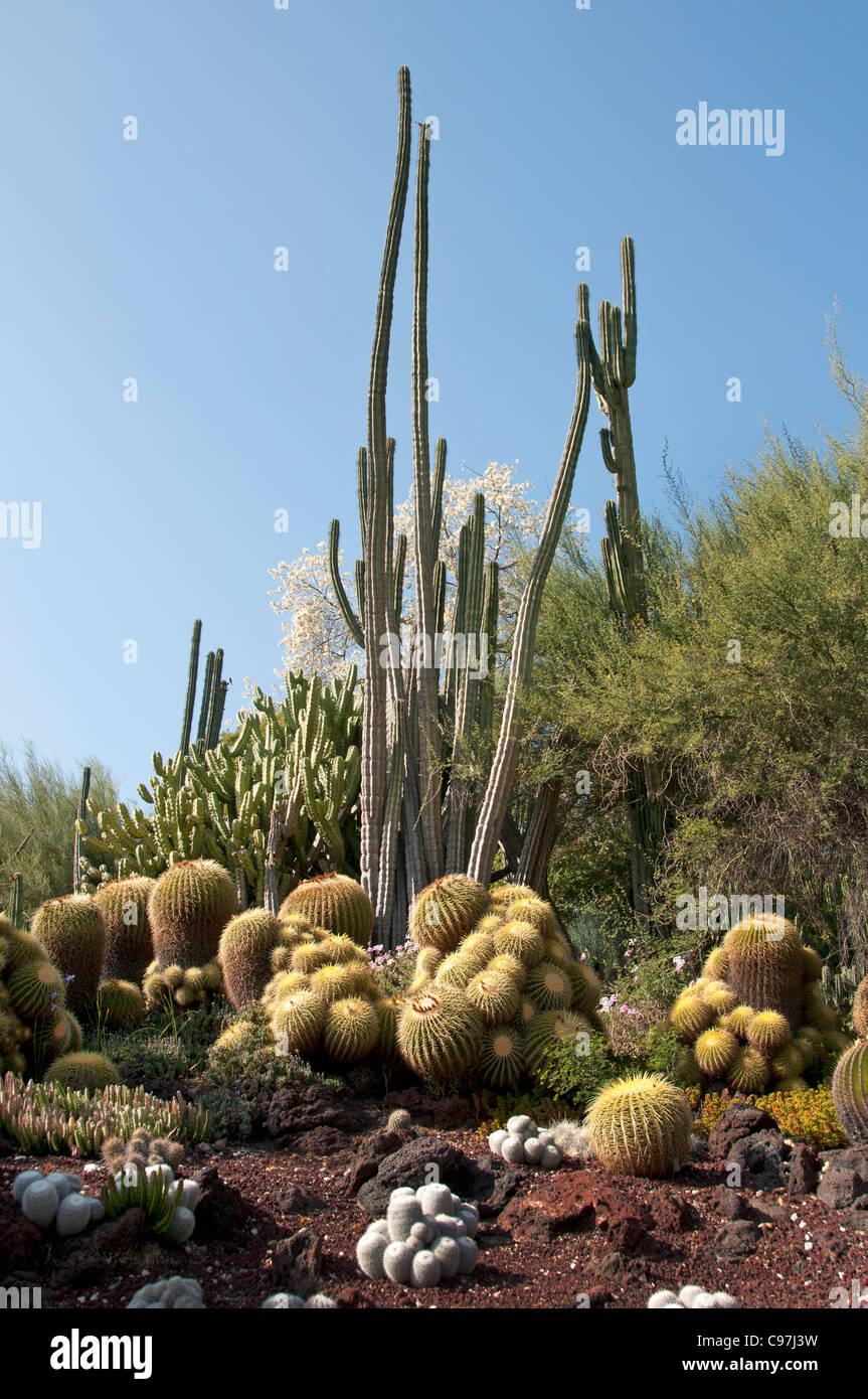 The Huntington, Library Art Collections, Botanical Gardens, Cactus  Succulents Garden San Marino California America