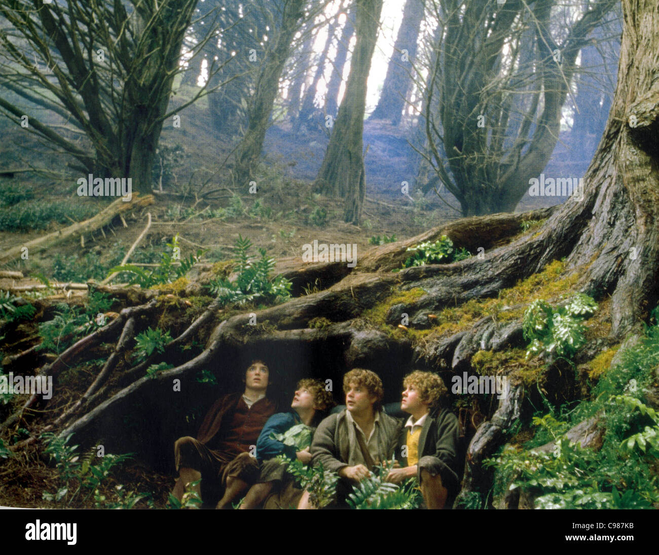 hobbit fantasy forest trees - photo #4
