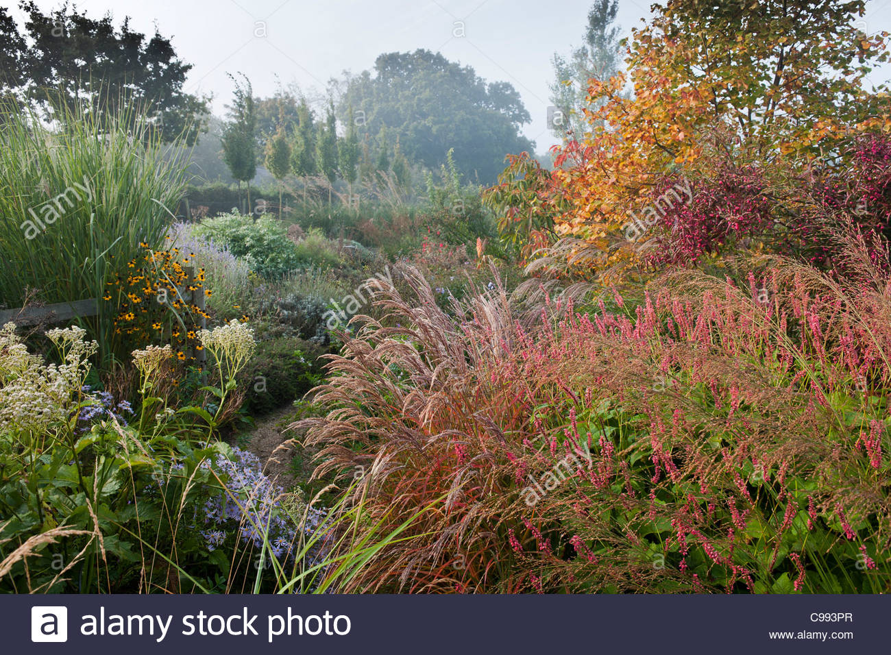 Marchants sussex early autumn fall borders perennials for Grasses for garden borders