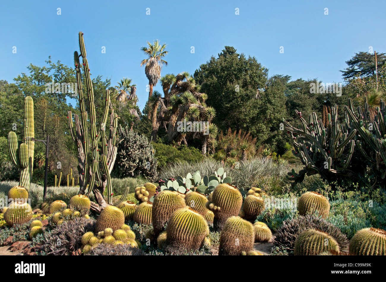 The huntington library art collections botanical gardens - Huntington beach botanical garden ...