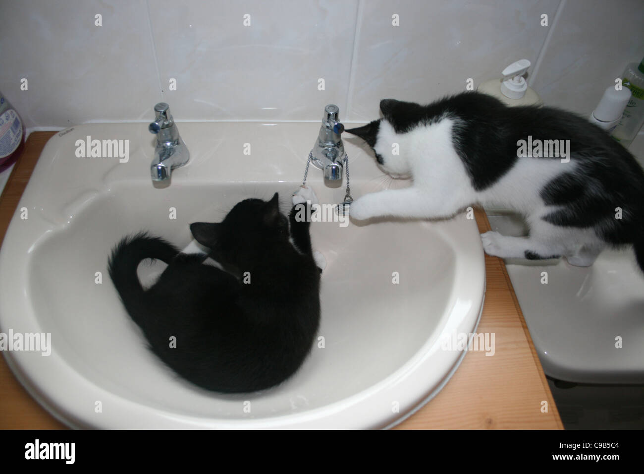 How To Wash A Kitten Best Cat And Kitten Image And HD 2017