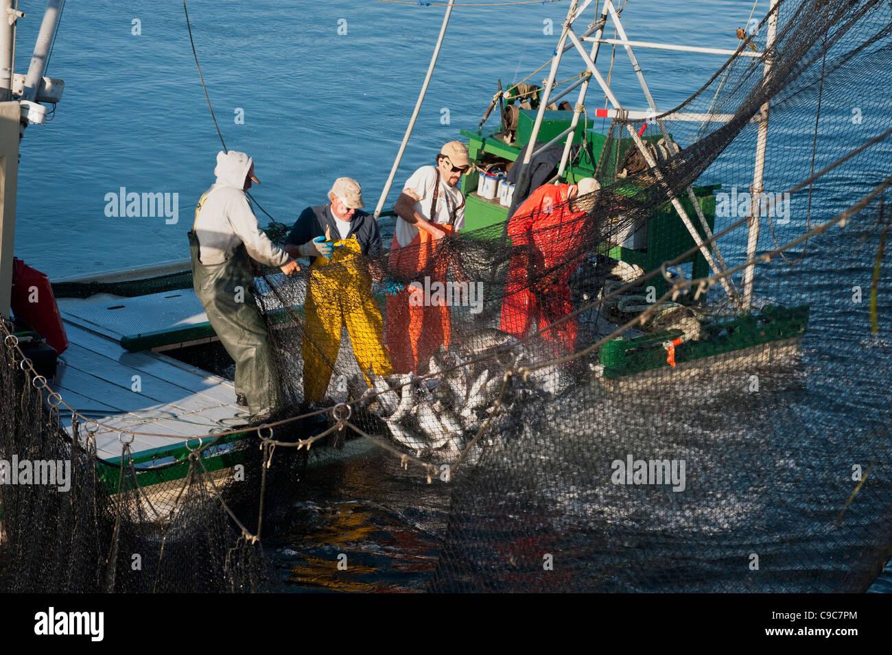 Fishermen on a reefnet salmon fishing boat haul a net full of wild fishermen on a reefnet salmon fishing boat haul a net full of wild pacific salmon into sciox Gallery