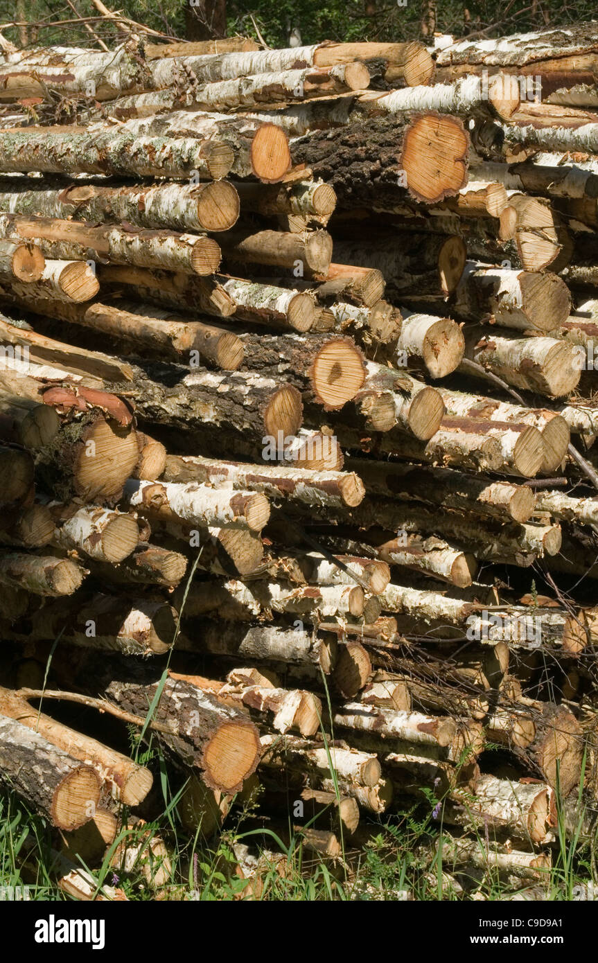 Birch Wood Logs ~ Birch wood log logs forest forestry timber woods tree