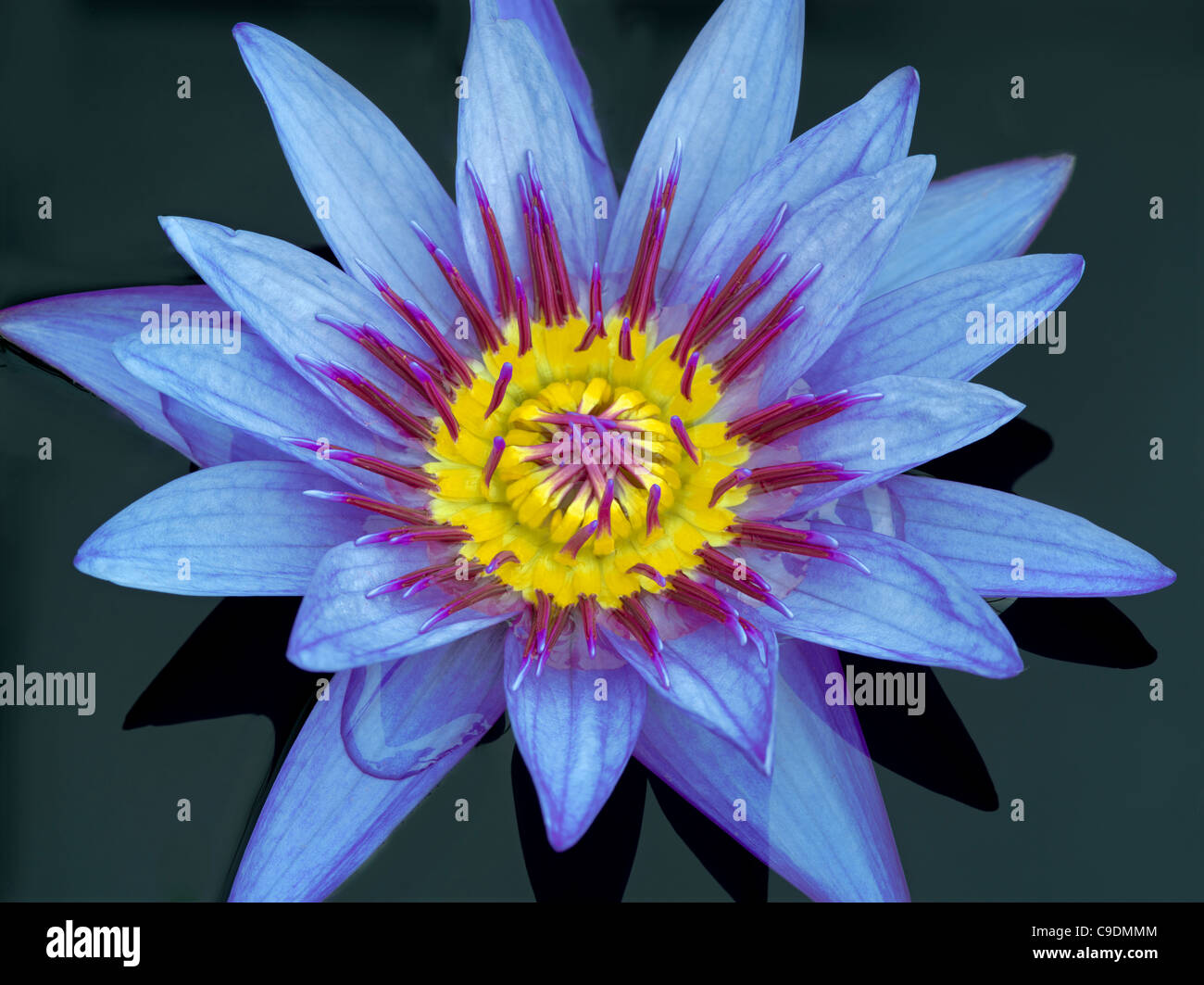Close up of tropical lily stock photo 40254276 alamy close up of tropical lily izmirmasajfo Images