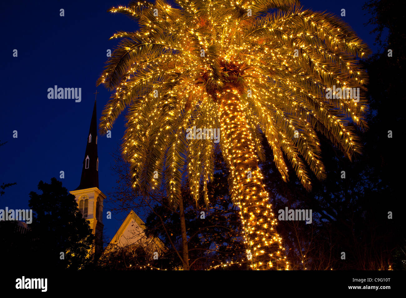 A Palm Tree Decorated With Christmas Lights Frames Citadel Square  - Christmas Lights In Sc