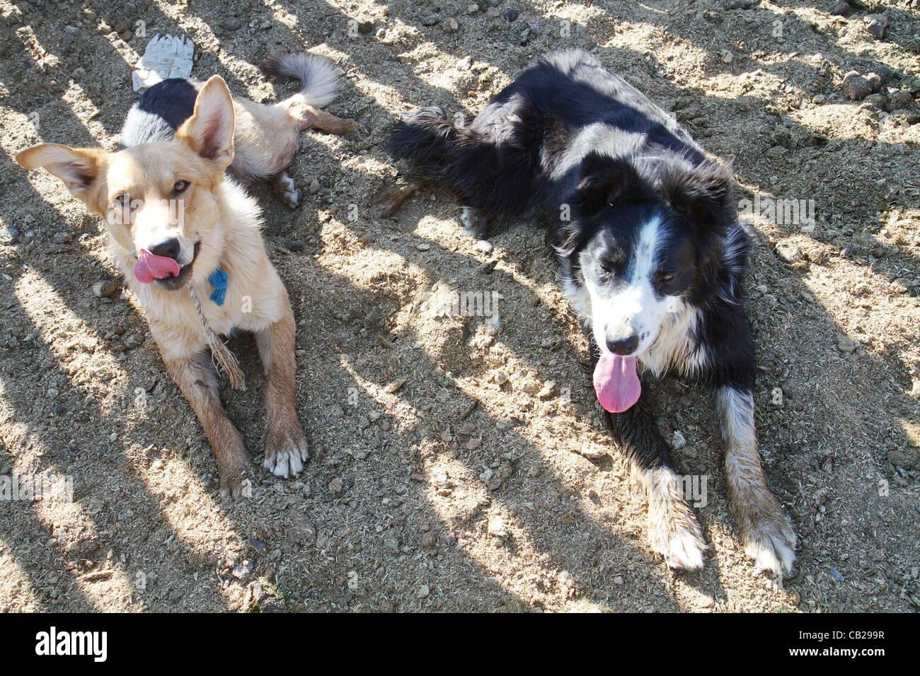 Free Dogs In Riverside