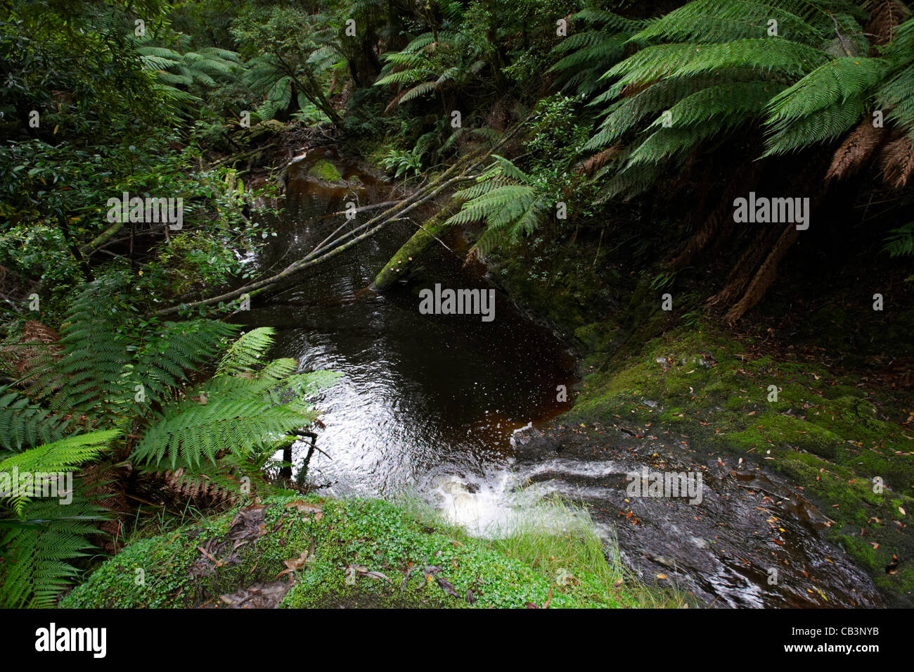 Strahan Australia  city pictures gallery : ... Looking over Hogarth falls, Peoples Park, Strahan, Tasmania, Australia