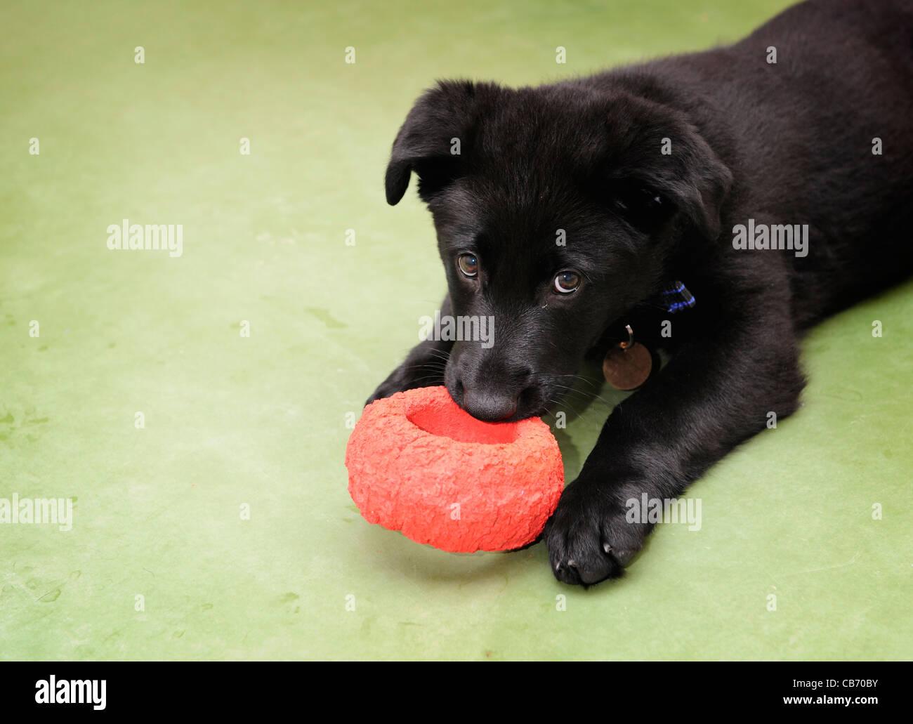 Kent Dog Training And Puppy Training Kent