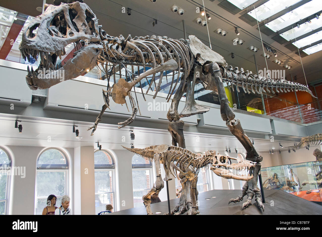Thomas The T Rex Tyrannosaurus Rex Dinosaur Hall Natural - Historical museums in usa