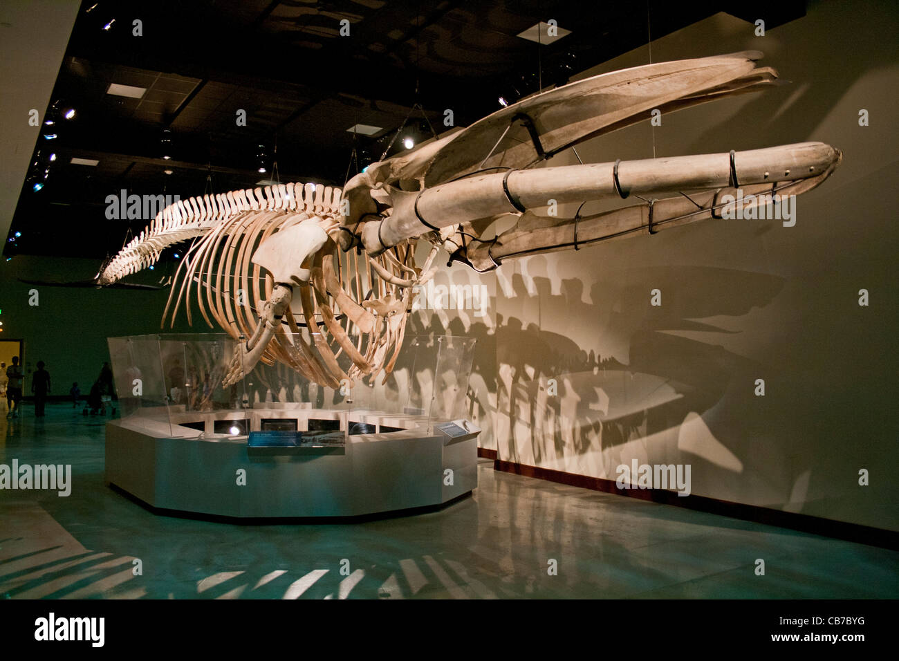 Fin Whale Natural History Museum Los Angeles California USA - Historical museums in usa