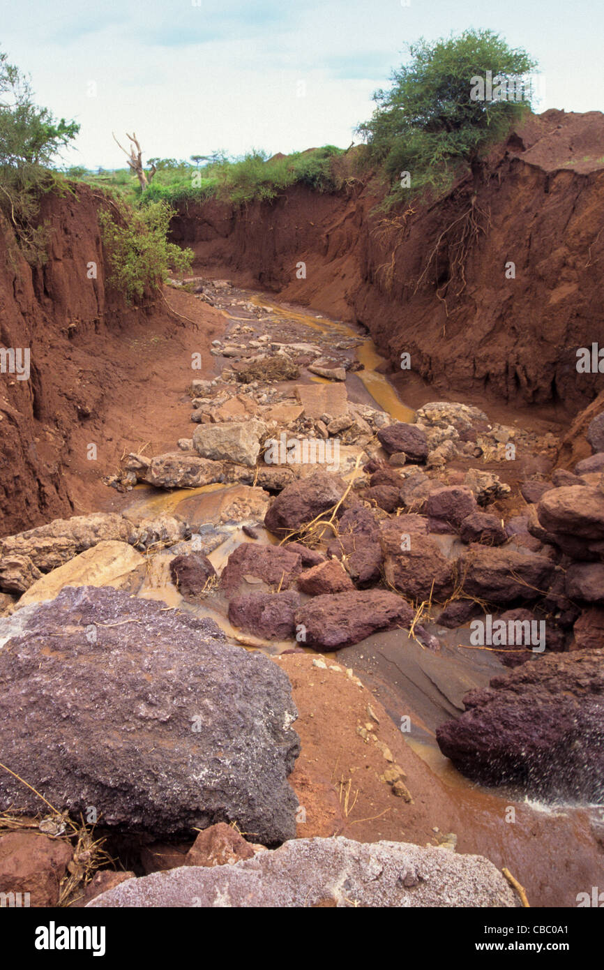 Gully erosion caused by loss of vegetation cover and run for Soil erosion causes