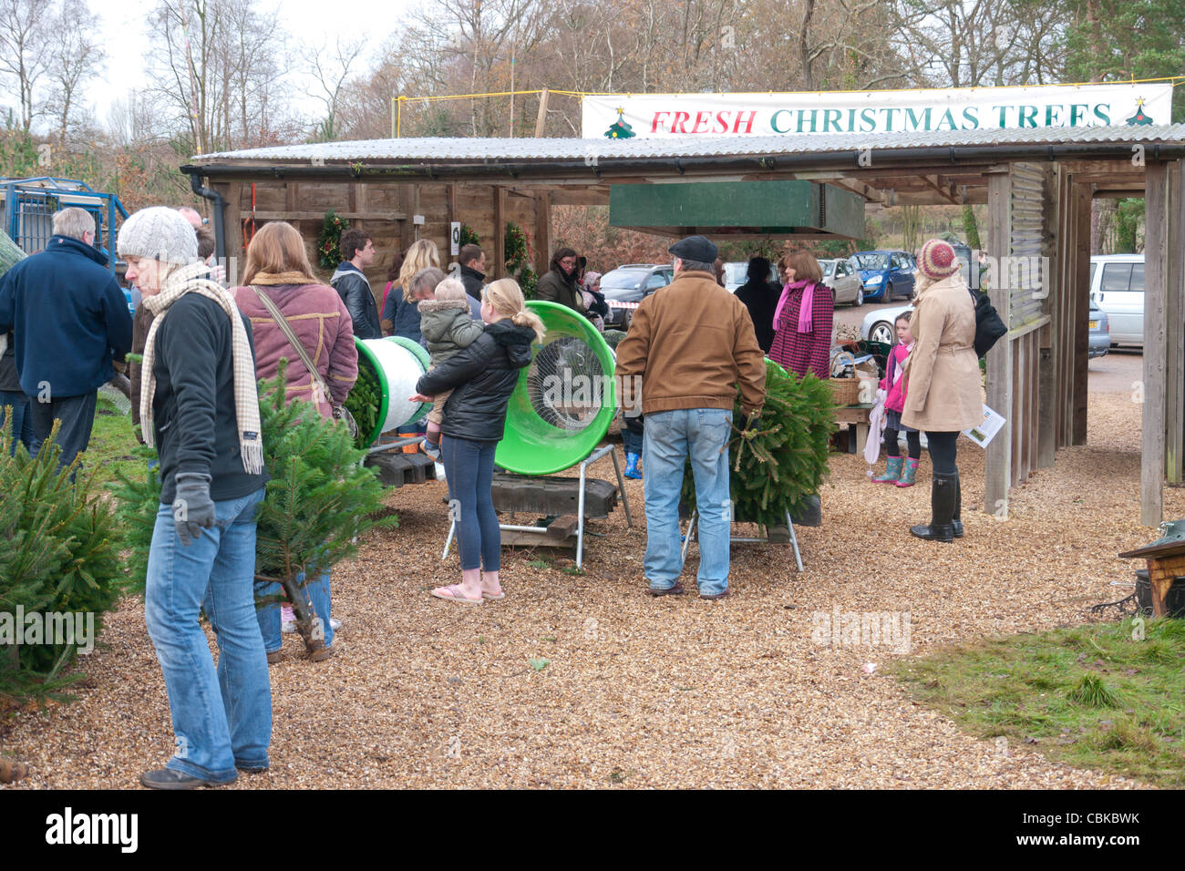 christmas tree farm shop sales on a busy saturday before xmas - Sales On Christmas Trees