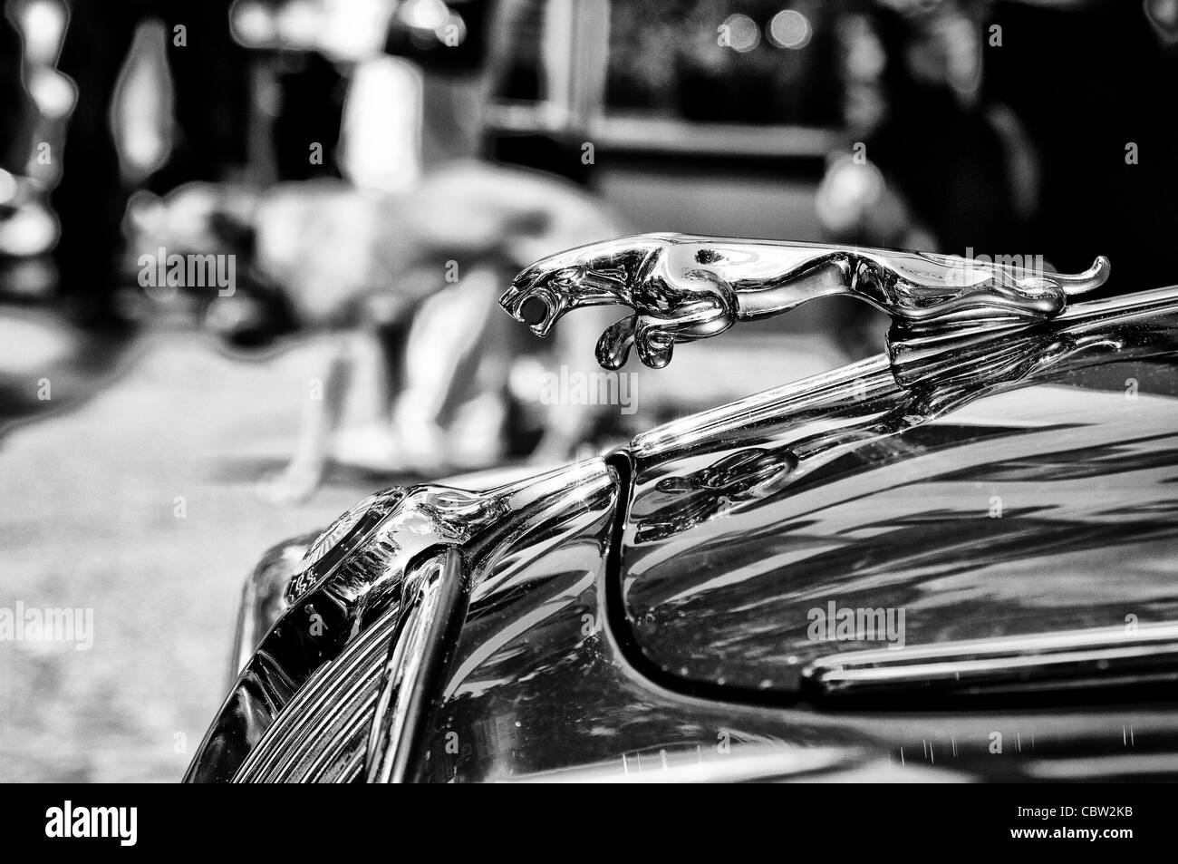 The symbol car jaguar stock photo royalty free image 41732863 the symbol car jaguar buycottarizona
