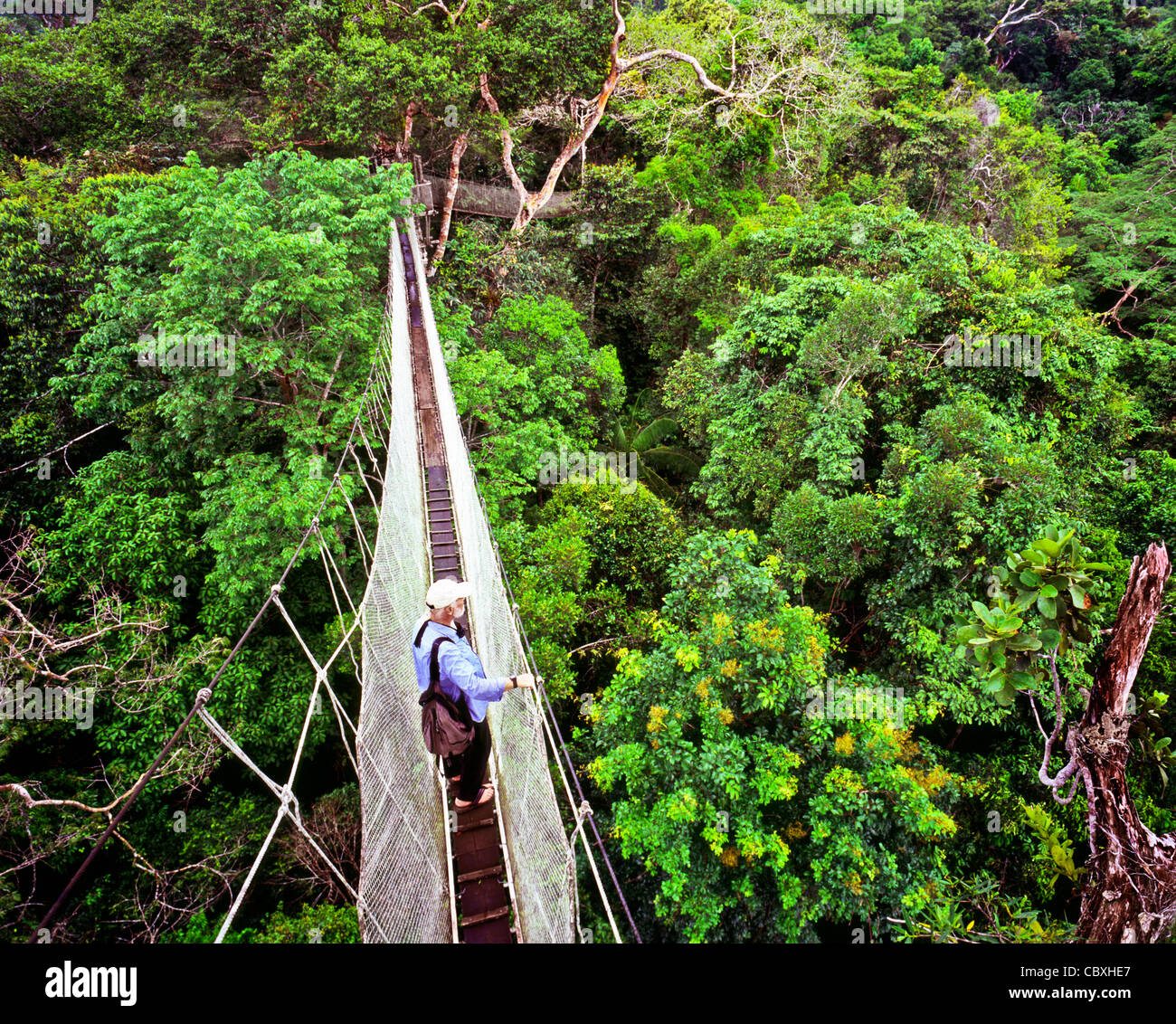 Canopy Walkway in the Amazon Jungle Peru & Canopy Walkway in the Amazon Jungle Peru Stock Photo Royalty Free ...