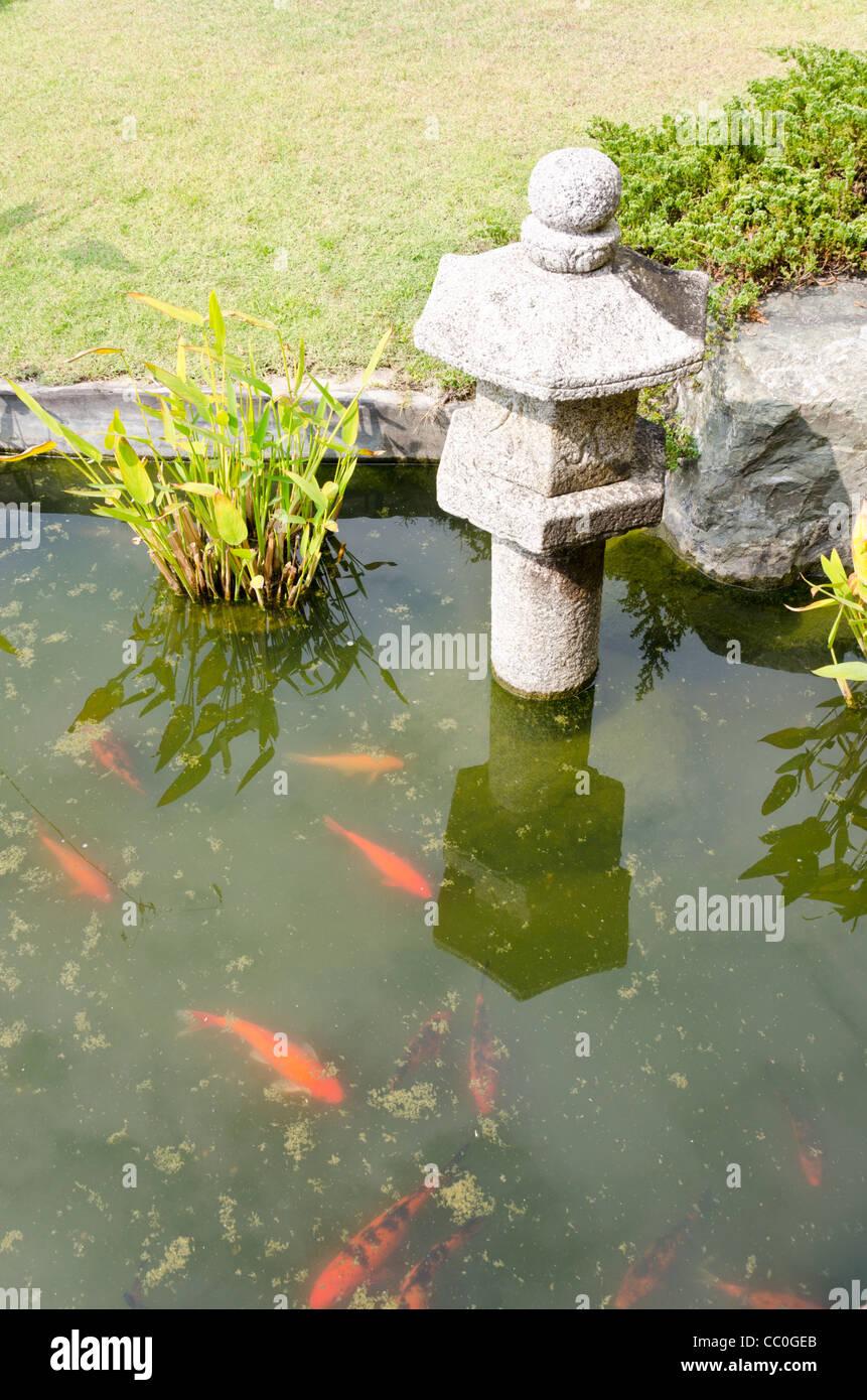 koi swim in pond by japanese lantern at japanese garden in chiang mai thailand