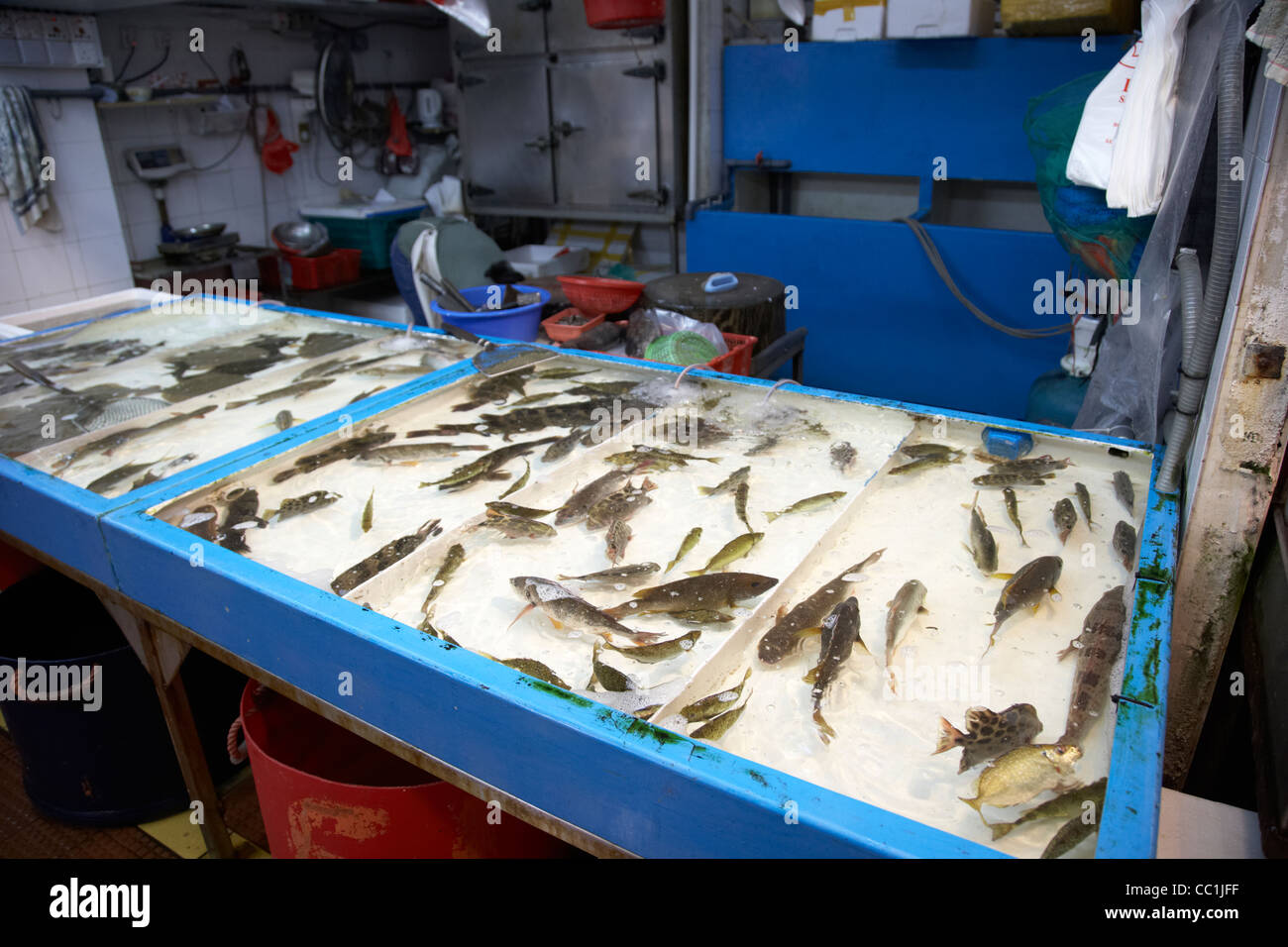 Live fish in table tops tanks for sale at yau ma tei for Live fish food