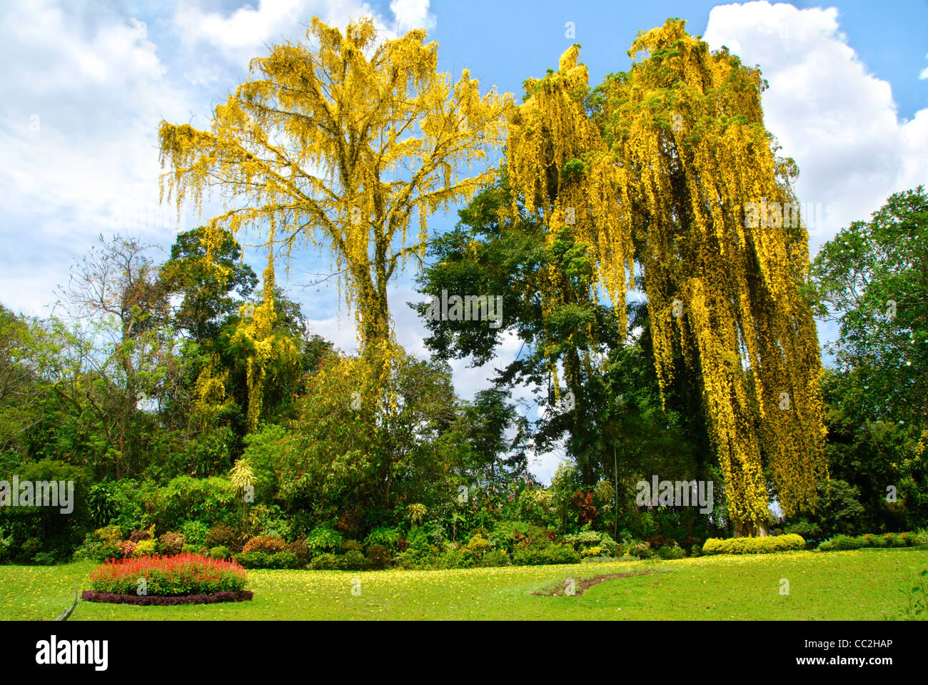 royal peradeniya botanical gardens near kandy sri lanka the park is stock photo royalty free