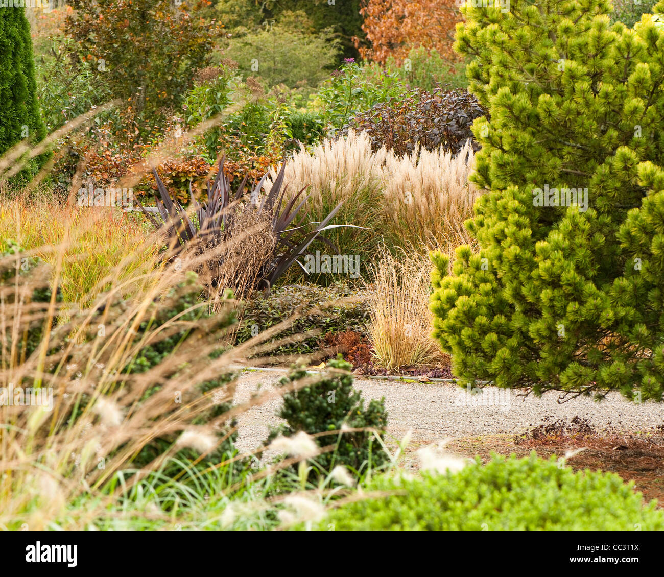Ornamental grasses and other plants in the foliage and plantsmans ornamental grasses and other plants in the foliage and plantsmans garden in autumn rhs rosemoor devon england uk workwithnaturefo