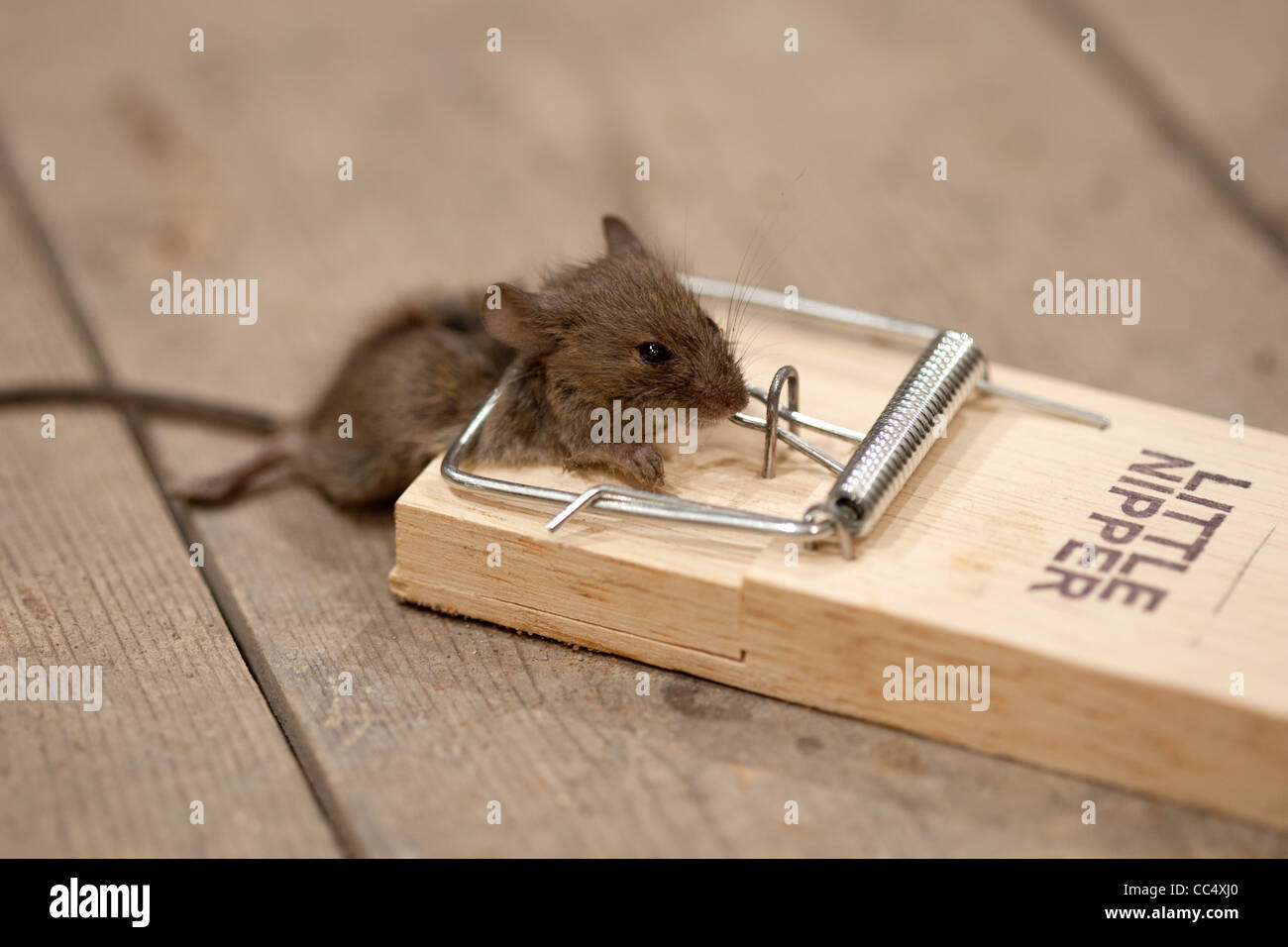 Very mouse trap got pics