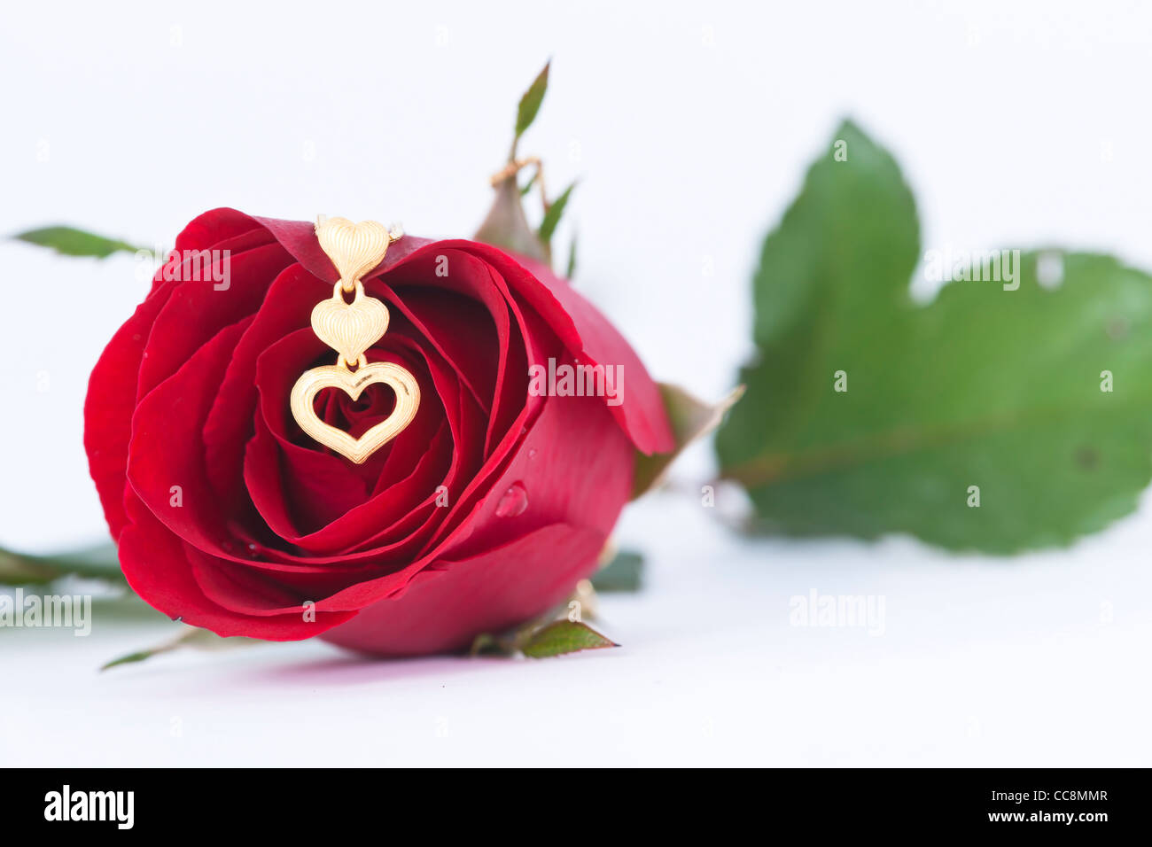 Gold heart pendant and red rose on white background stock photo gold heart pendant and red rose on white background mozeypictures Image collections