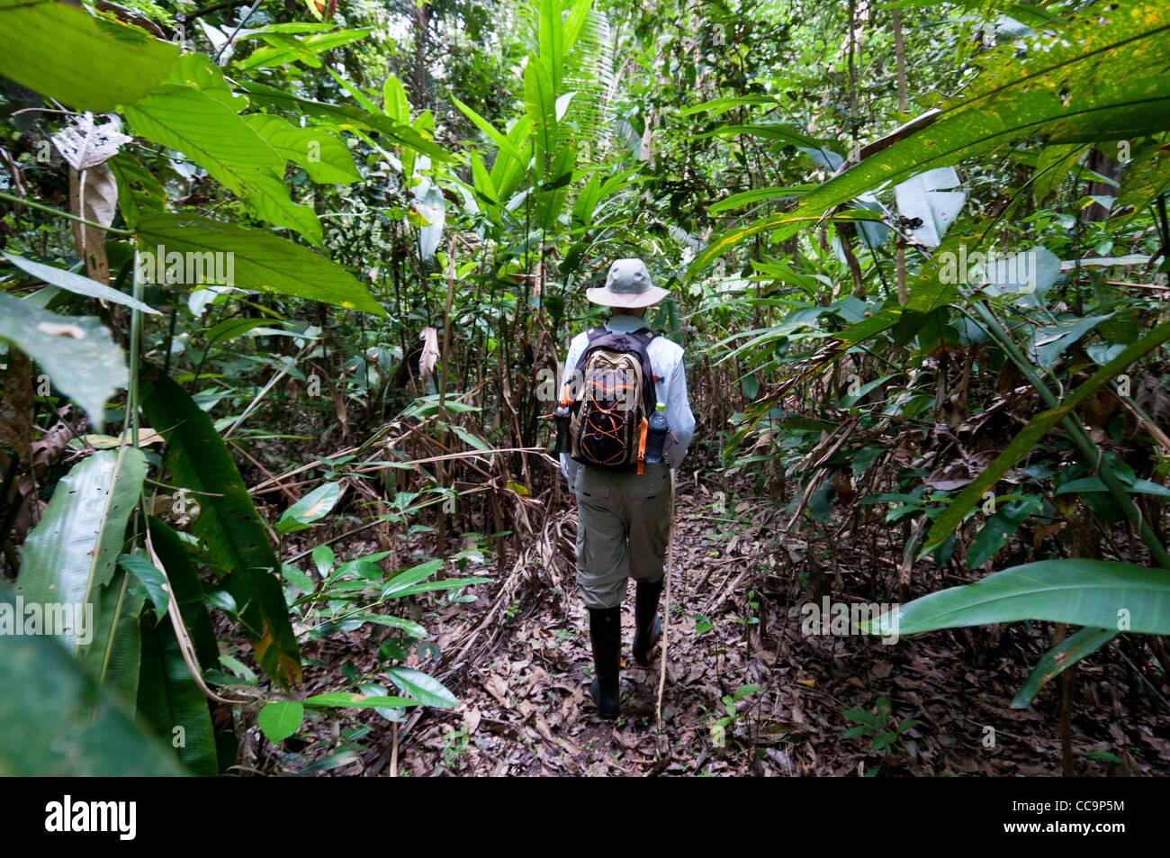 Pacaya Samiria National Reserve, Peru. Walking In The