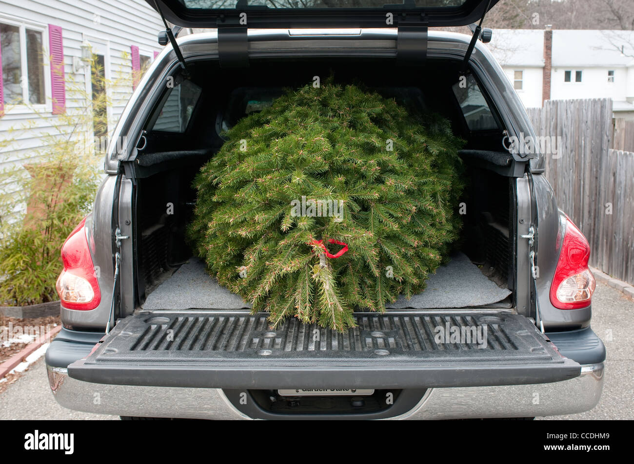 Free Christmas Tree Pick Up Part - 29: Stock Photo - A Christmas Tree In The Back Of A Pickup Truck