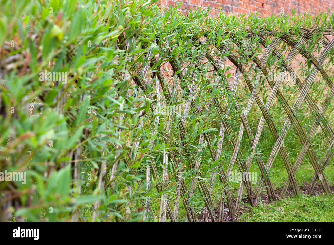 Live Willow woven screen fencing or fedge  England  UK   Stock ImageWillow Fencing Panels Stock Photos   Willow Fencing Panels Stock  . Living Willow Fence Panels. Home Design Ideas