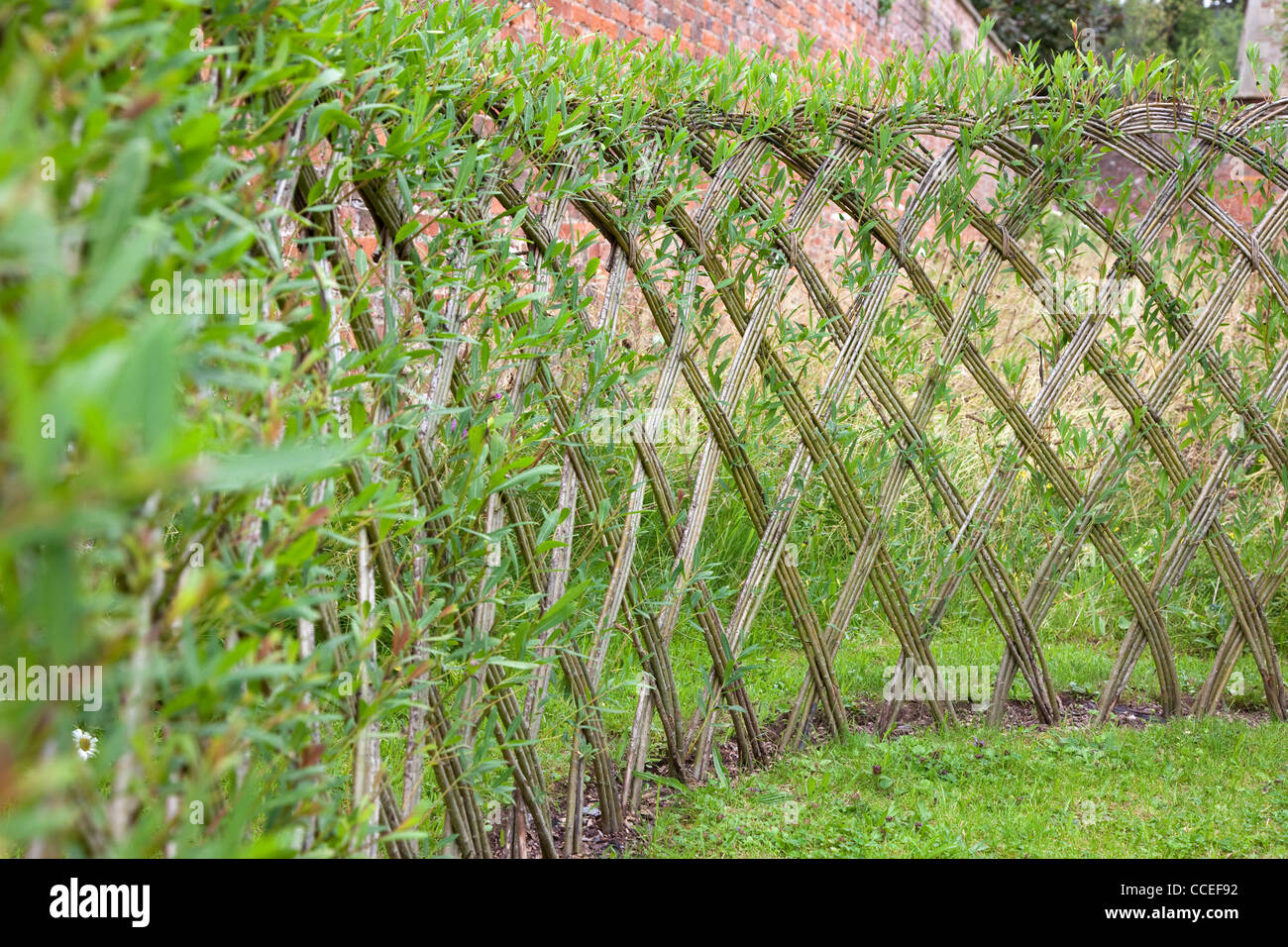 Live Willow Woven Screen Fencing Or Fedge England UK Stock Photo Royalty F