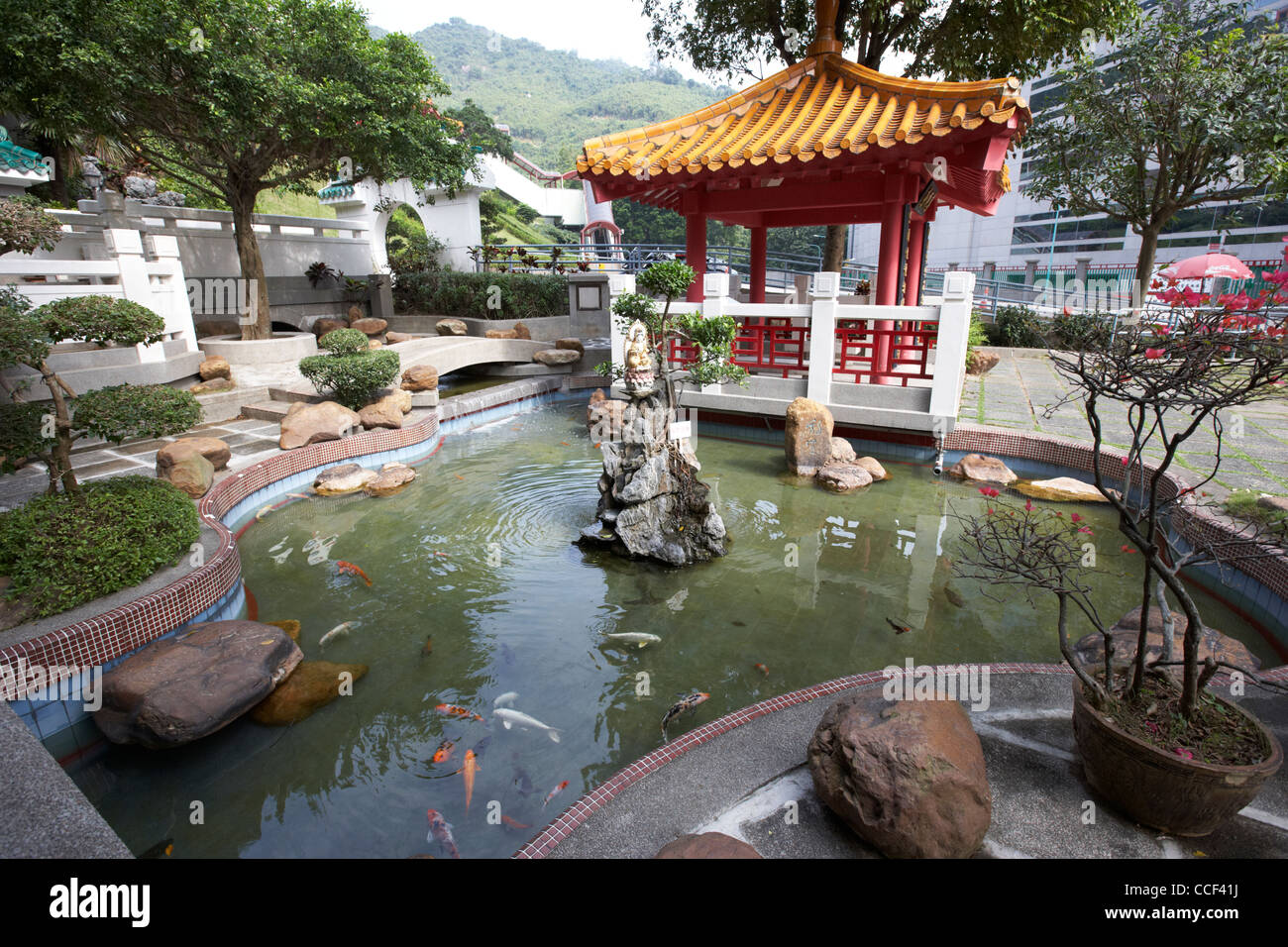Ornamental garden and koi carp fish pond po fook hill for Ornamental fish garden ponds