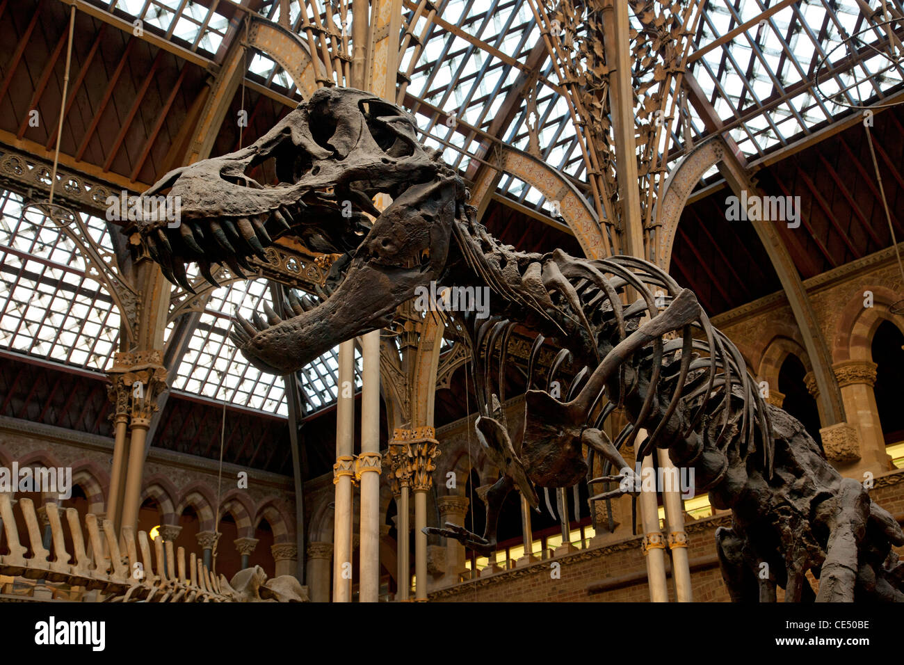 Where Is The Natural History Museum Oxford