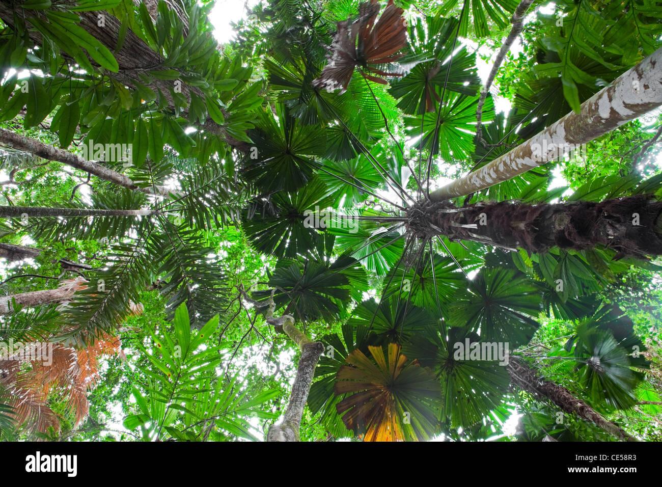 daintree rain forest rainforest stock photos u0026 daintree rain