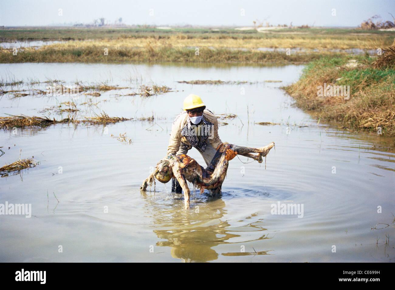 Rescue man holding dead body ; Cyclone in Orissa ; India November ...