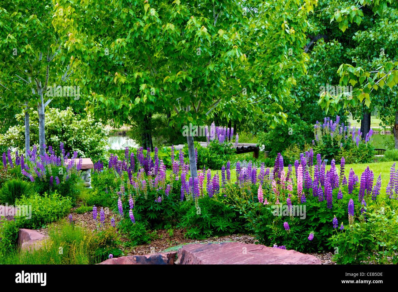 Lupine Garden Done pics