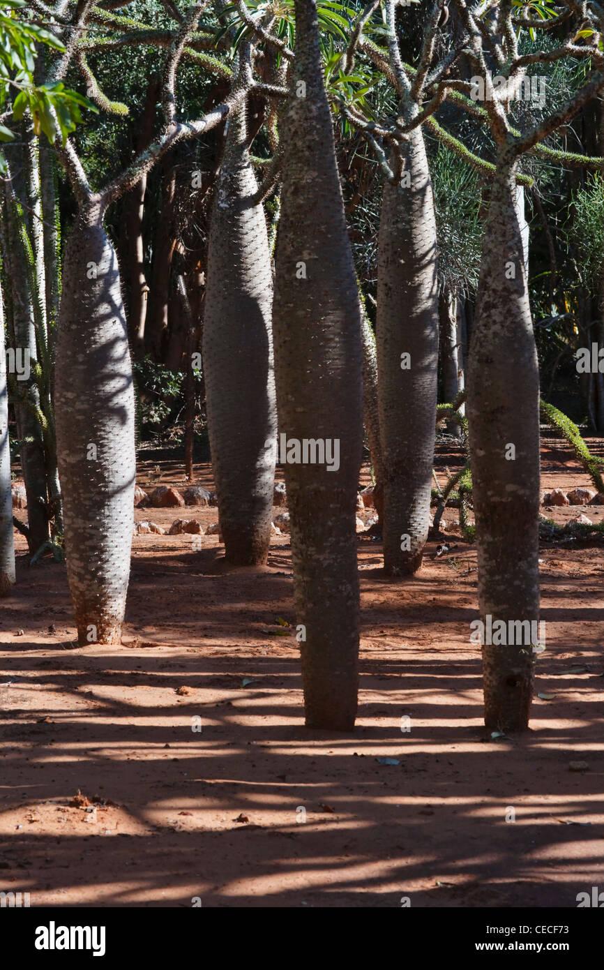 Nature Park Podium Sign