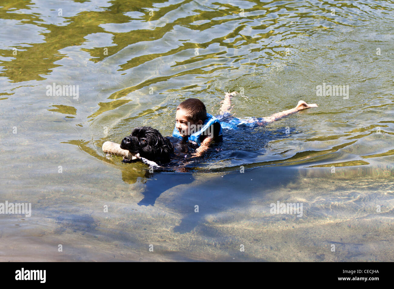 Child swimming with a Newfoundland dog Stock Photo ... Newfoundland Swimming