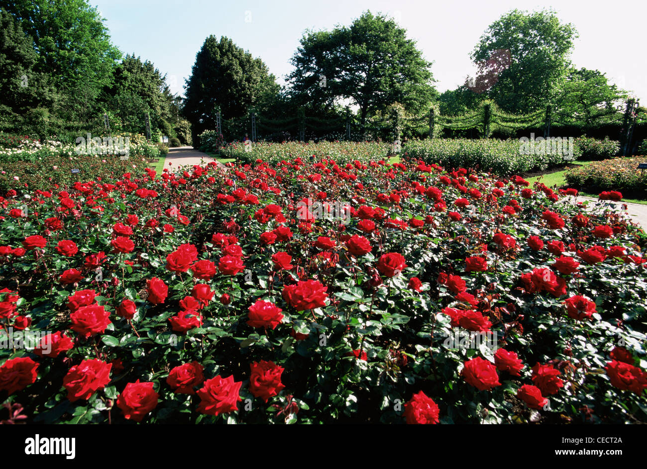 England london regents park queen mary 39 s gardens rose for Garden design queens park