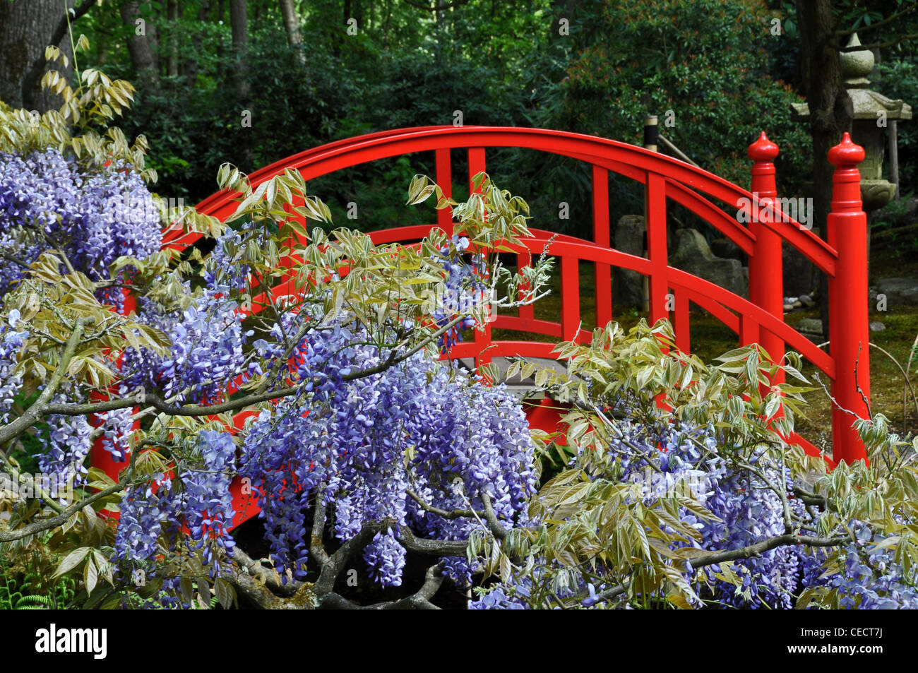 Red Bridge In Japanese Garden, The Hague, Netherlands, Europe   Stock Photo