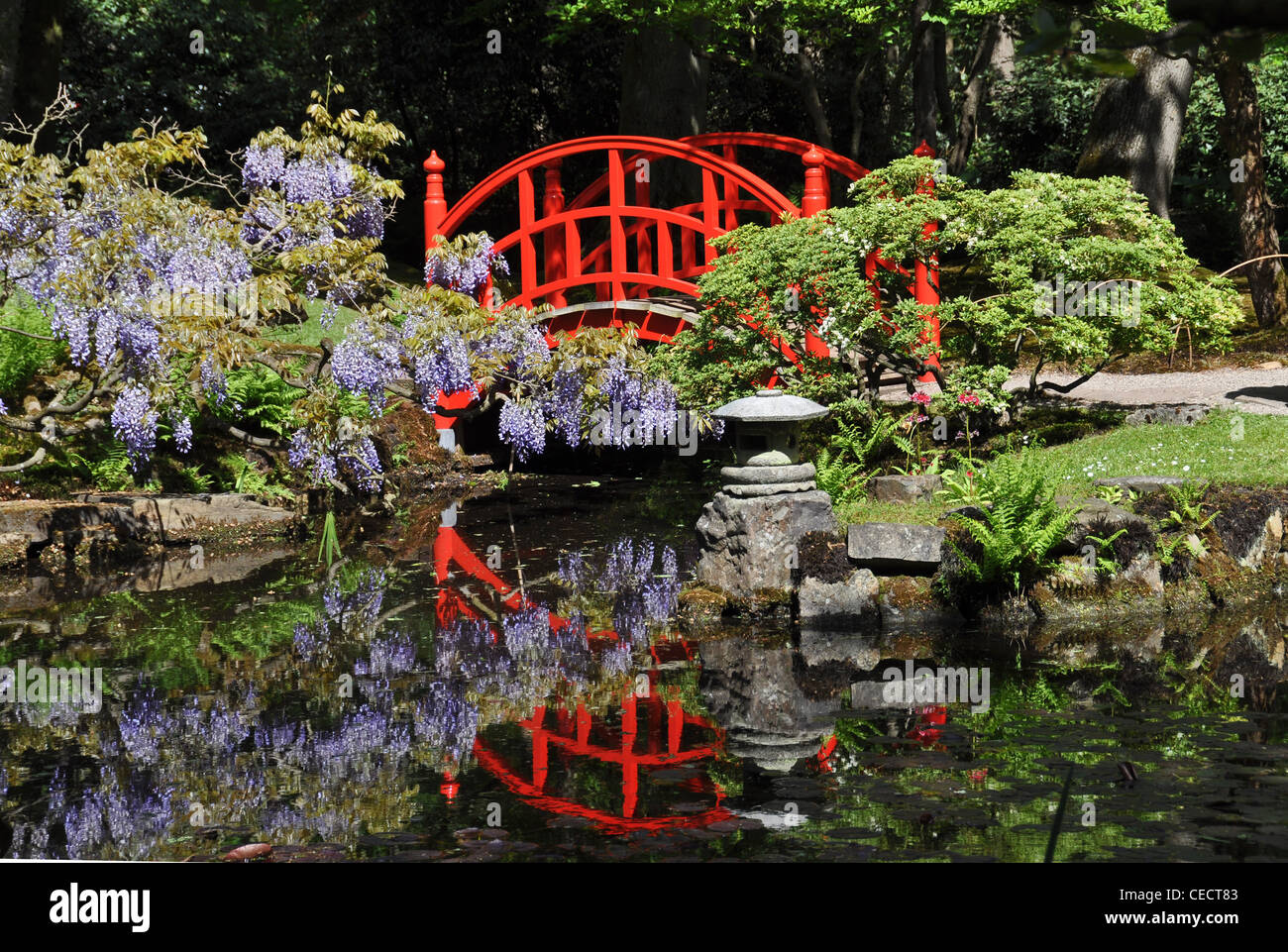 red bridge in japanese garden the hague netherlands europe