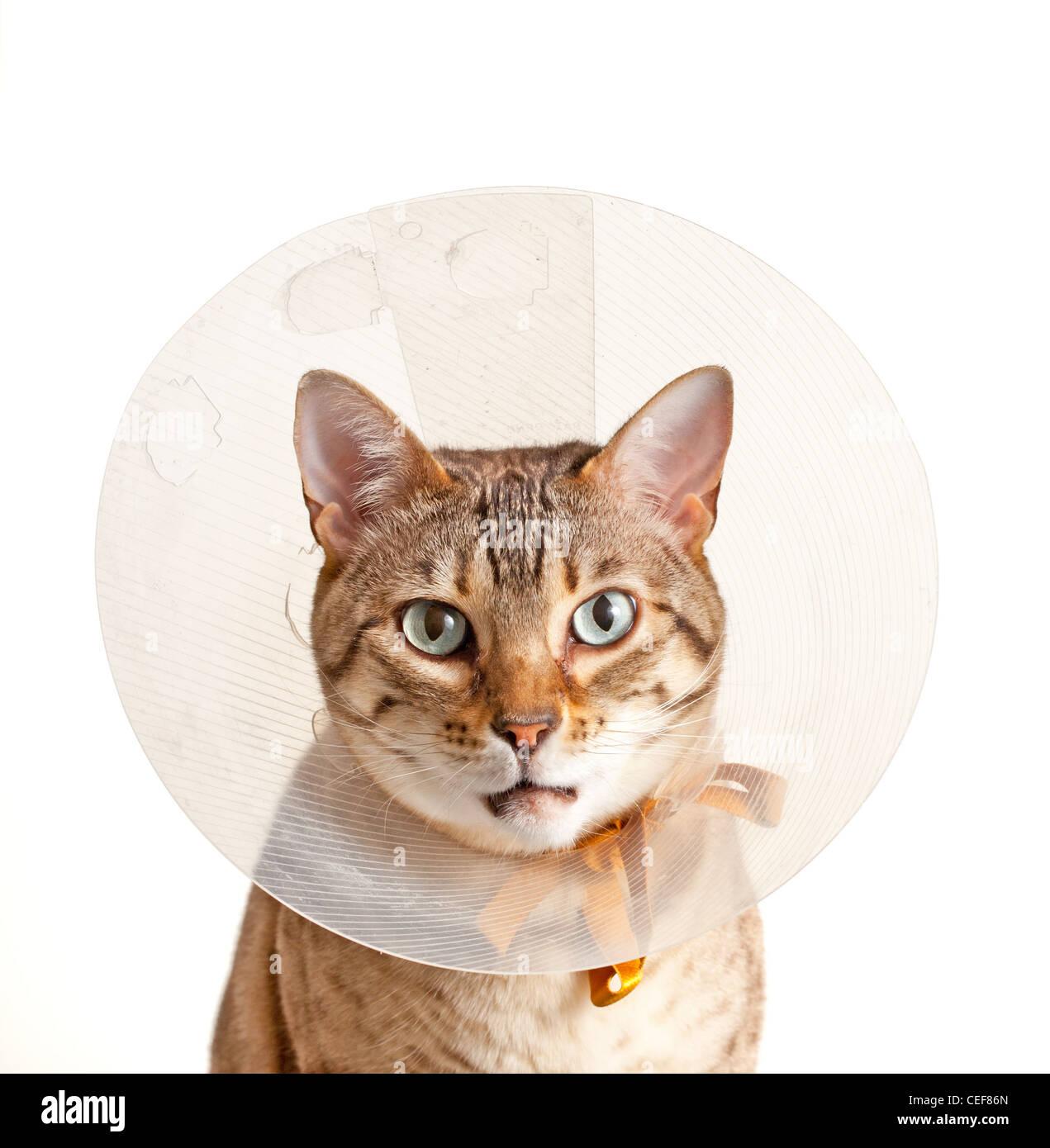 Воротник на шею кошке как сделать