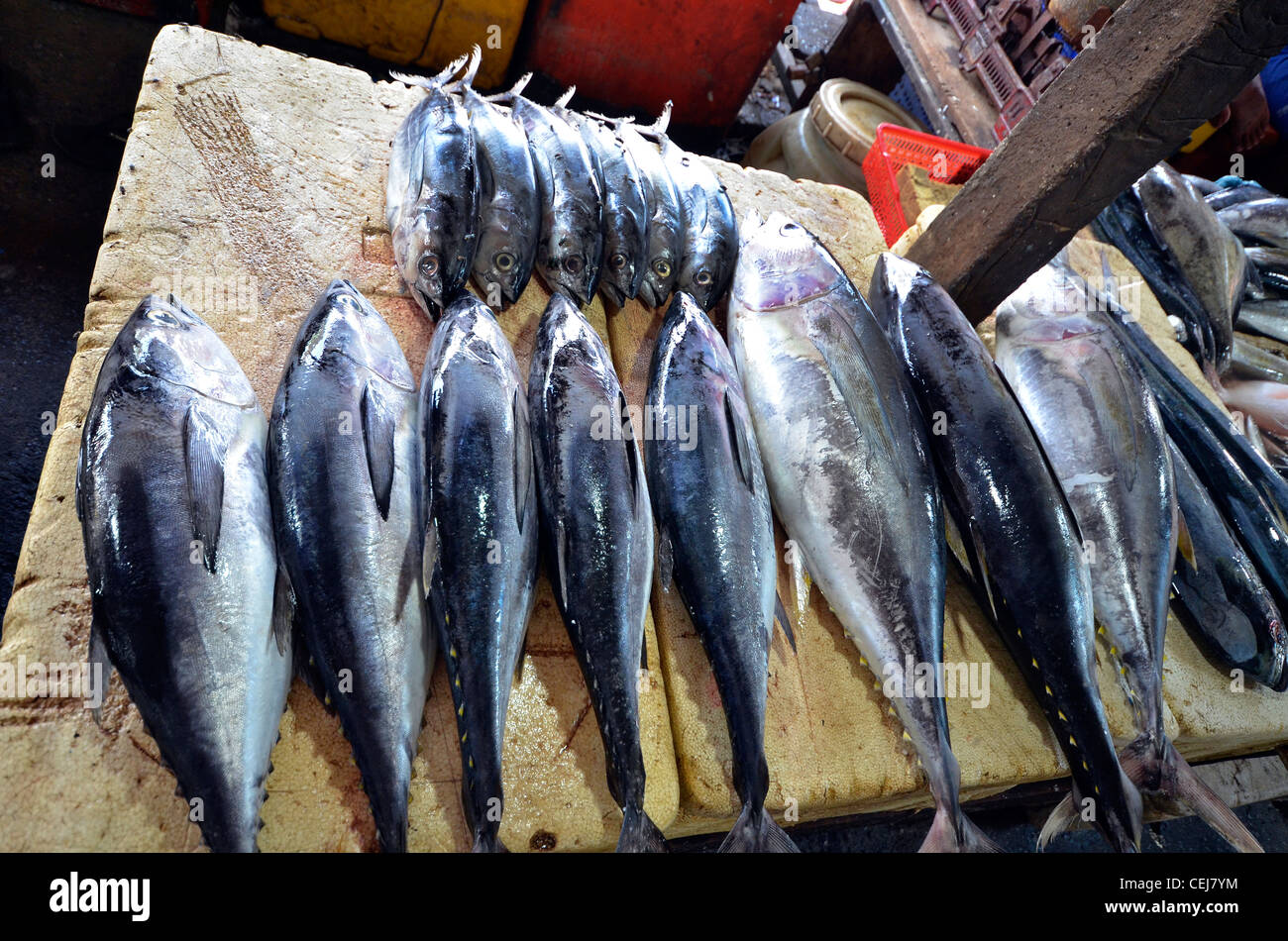 Fresh fish for sale at jimbaran local fish market near for Stock fish for sale