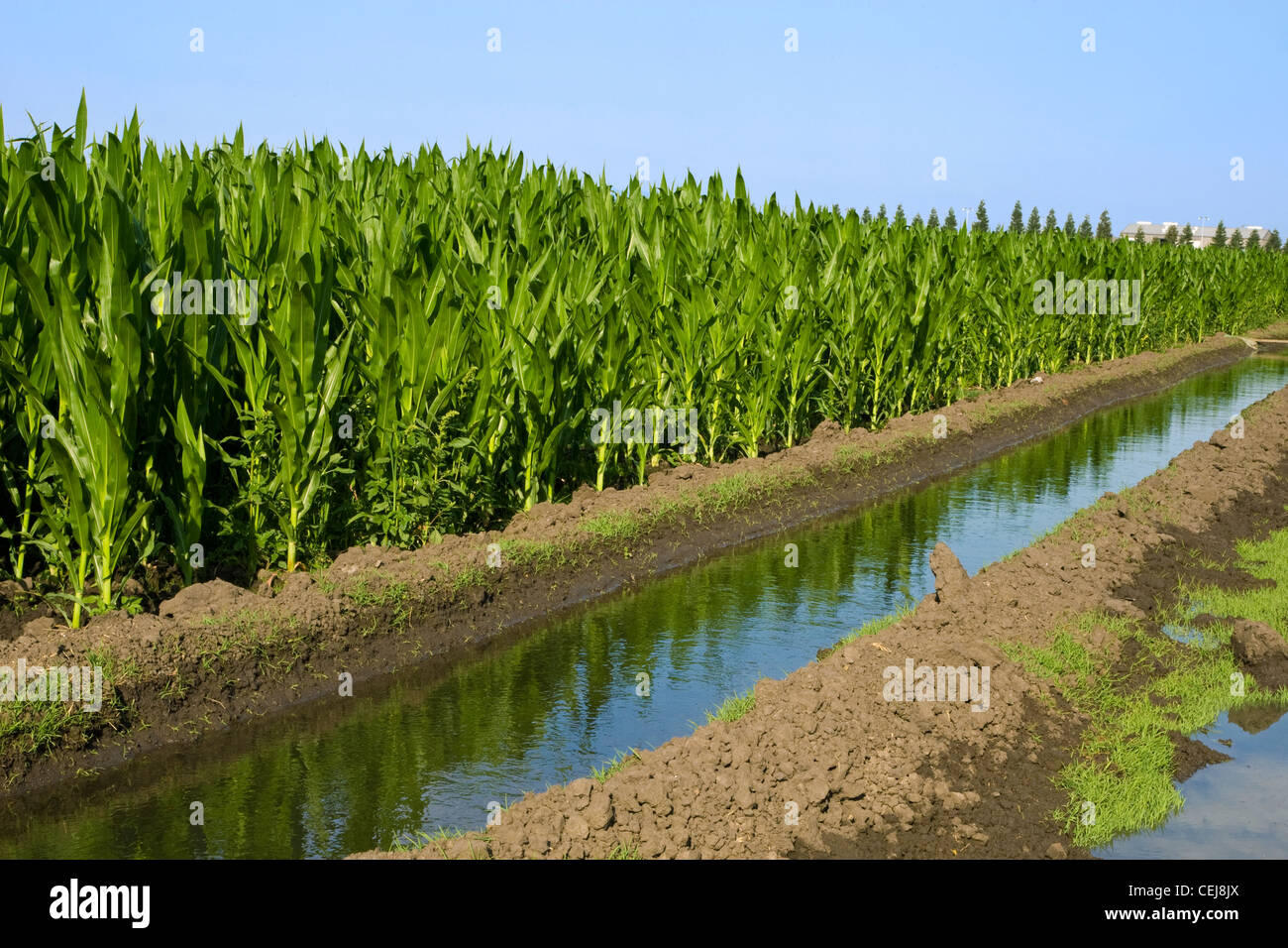 Agriculture Irrigation Canal Running Alongside A Mid