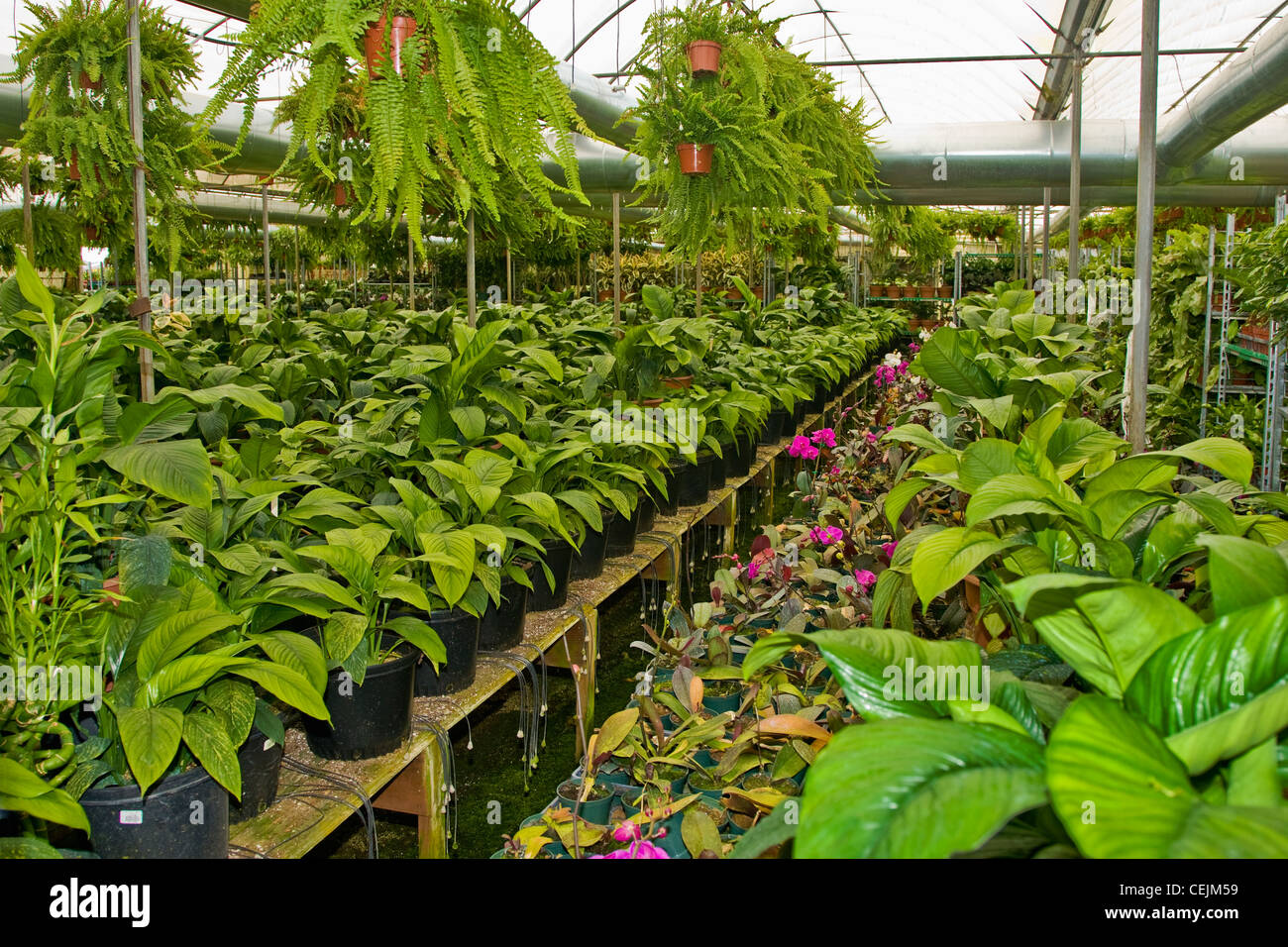 Agriculture Potted garden plants in a nursery greenhouse near – Nursery Garden Plants