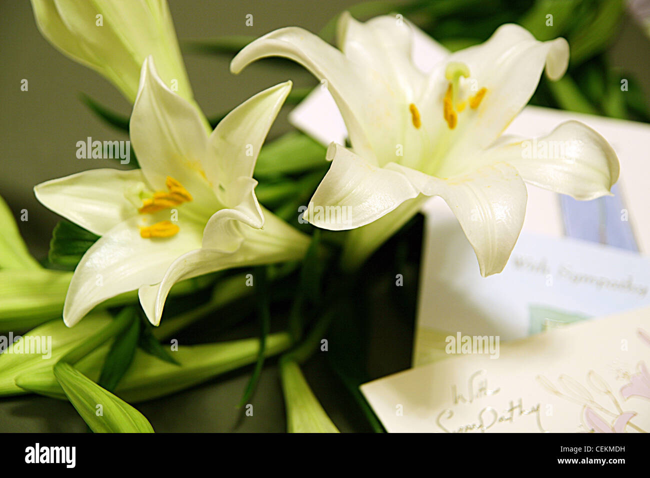 White lilies and with sympathy greetings cards stock photo white lilies and with sympathy greetings cards kristyandbryce Choice Image