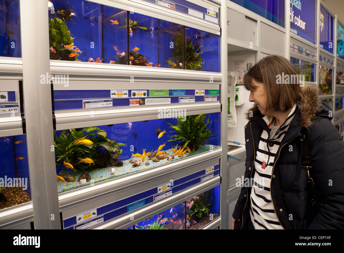 A woman looking at fish in a pet shop tank pets at home for Fish and pet store