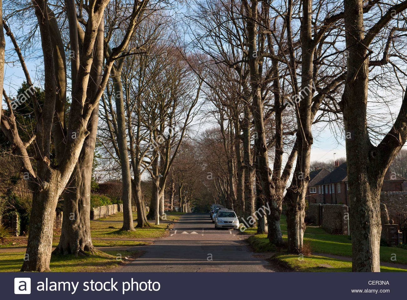 tree lined road ratton drive eastbourne east sussex england winter