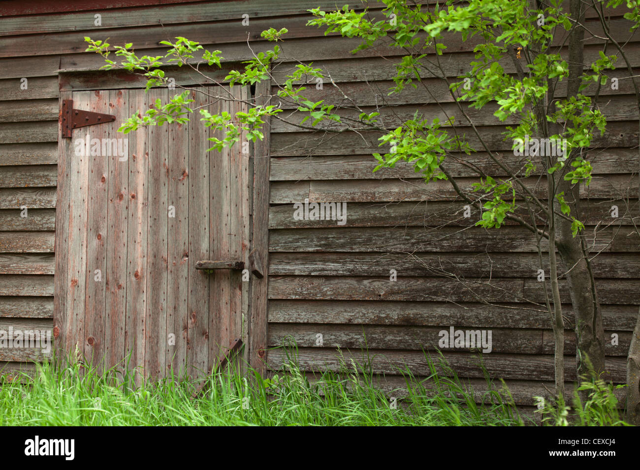old barn doors with green grass; manitoba, canada Stock Photo ...